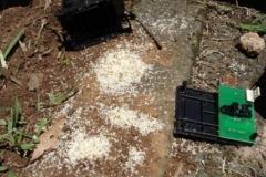Ants in Sensors